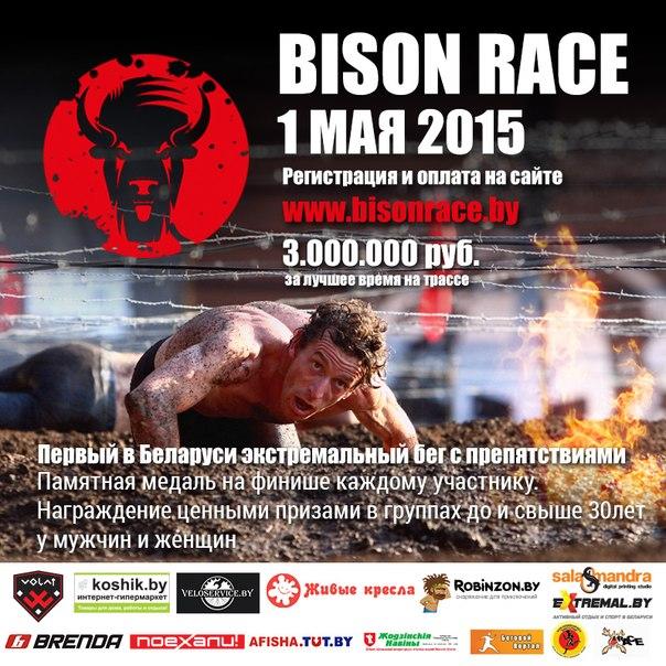 bisonrace0.jpg